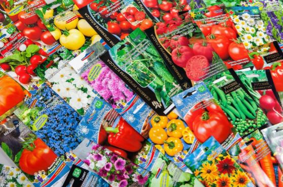 Рекомендации по открытию собственного бизнеса по продаже семян