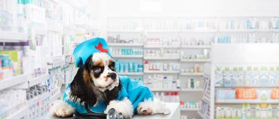 Открываем ветаптеку с нуля