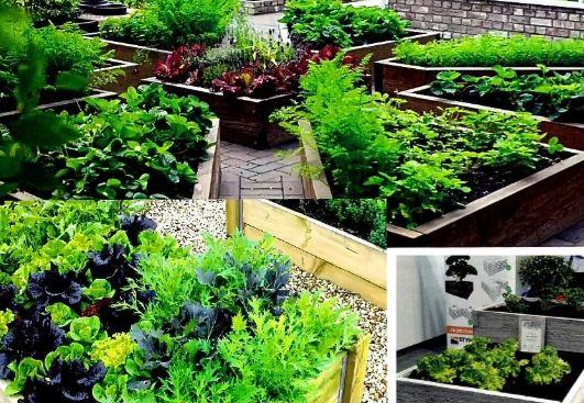 Организация пространства для выращивания зелени на продажу